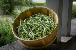 légumes verts - aliments à éviter avant le sport
